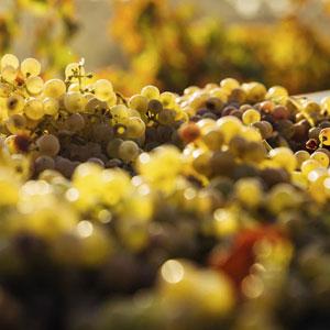 ボルドーが世界に誇る、黄金に輝く「ワインの宝石」